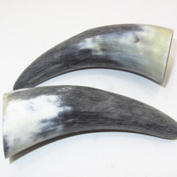 2 Cow horn tips ....E2A72... Unfinished, raw cow horns.,.....