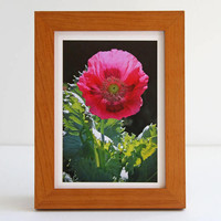 Big Pink Poppy Photo Greeting Card, Beauty in the Garden, Fine Art Photography, White Nature Notecard for Gardeners, Spring Wildflowers