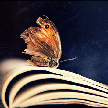 Fine Art Photography, Still Life broken butterfly. Dreamy Original Artwork. Navy blue background, Gold brown color. Rustic. Nature. Shabby