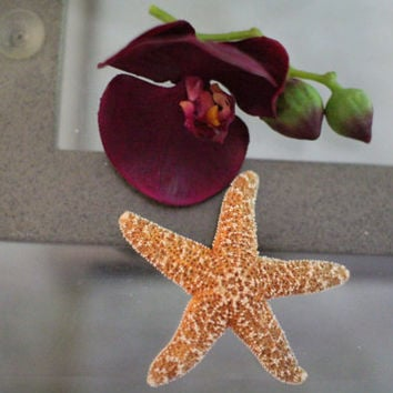 Starfish  Barrette,  Mermaid Costume, Starfish hair clip,Beach Weddings