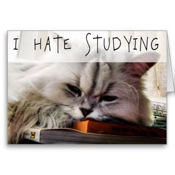 I Hate Studying LOLCAT Funny Kitty Greeting Card