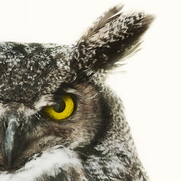Nature Photography, Great Horned Owl Photograph, Bird, Animal, Feathers, Tribal, Eye, Gold, Yellow - Say It Like You Mean It