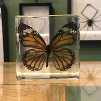 Common Tiger Butterfly Paperweight