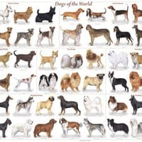 (24x36) Dogs of the World Educational Science Chart Poster