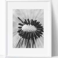 Dandelion Flower Art Photography, Black and White Modern Art, Prints