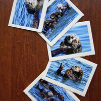 Five Sea Otter Nature and Wildlife Photo Note Cards - Set VII