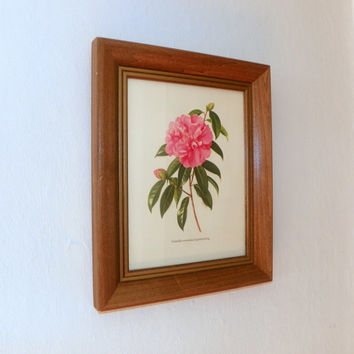 Vintage Botanical Print, Pink Camellia, Wood Framed Floral Art, by Artist Paul Jones