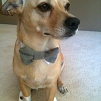 Wedding Dog Cuffs And Bow Tie on Luulla