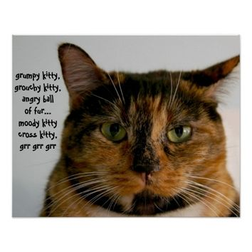 Fat Cat with Attitude, grumpy kitty song