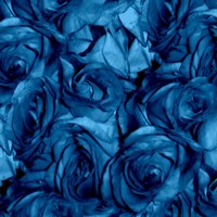 Roses Can Sing the Blues - peacoquettedesigns - Spoonflower