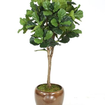 6' Fiddle Leaf Fig Tree In Glazed Mocha Stoneware Pot