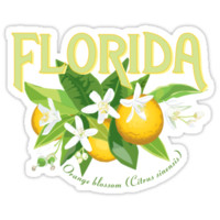 'Florida - State Flower, Orange Blossom' Sticker by contourcreative