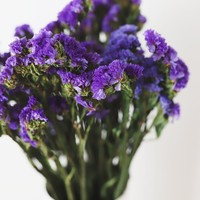 """Preserved Statice Bundle in Purple - 4 oz Bunch - 13-16"""" Tall"""
