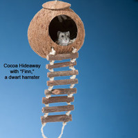 Naturals Coco Hideaway with Ladder for Small Pets: Toys for Rats, Mice and Small Pets