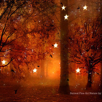 """Nature Photography, Surreal Haunting Twinkling Stars Lights Autumn Fall Woodlands, Orange Sepia Brown Fine Art Nature Photo 9"""" x 12"""""""