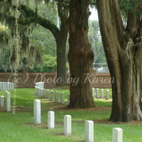 Protected Patriots, National Cemetery, Beaufort, SC 5 x 7 Original Photograph, other sizes available