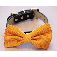 Orange Dog Bow tie with Leather Collar, Spring wedding dog accessory