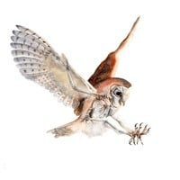 """Barn Owl Watercolor Skeleton"" - Art Print by JP Lara"