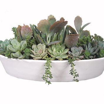 "Pastel Succulent Garden 13"" White Boat-shaped Ceramic Pot Dish Garden Centerpiece Modern Minimalists Vessel Planter"