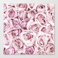 Blush Roses Canvas Print by allisone