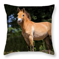 Wild Horse Stands Proudly