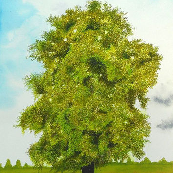 Sycamore Maple Tree Watercolor Painting