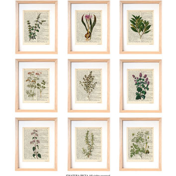 Kitchen herbs wall art set of 9-set of 9 herbs dictionary prints-kichen print set-botanical print-herbs spices wall art-NATURA PICTA-DP182
