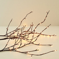 Willow Branch Lighting