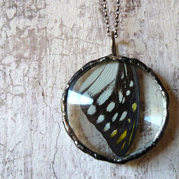 Real Black, White and Yellow Butterfly Wing Necklace. Sterling Silver Chain.Natural History. Woodland Butterfly Jewelry