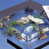 Amazon.com: Midwest Tropical 675 Square Aquarium Coffee Table: Furniture & Decor