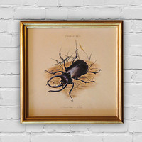 Vintage print: Scarab beetle, An Epitome of the Natural History of the Insects of India by Edward Donovan, London, 1800. 8'x8' (20x20cm).