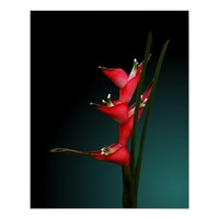 Heliconia Stricta Red Flowers