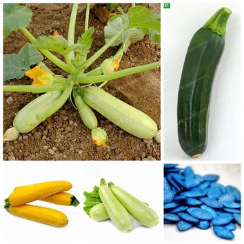 10 Pcs Rare Summer Squash Seeds Organic Heirloom Bonsai Zucchini Seeds Vegetable Rruit Seeds Potted Plant For Home Garden