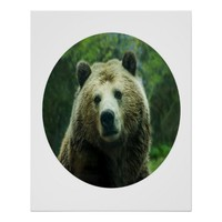 Bear Photograph In A Circle 24 X 30 Poster