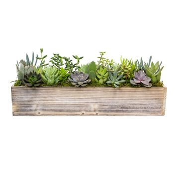 LIVE Succulent Window Garden in a Reclaimed Wood Planter - Ships Alone