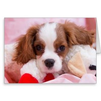 Cute Puppy Cavalier King Charles Greeting Card