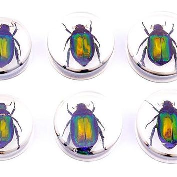 Womens Mens Unique Beetle Insect Clear Transparent Acrylic Plugs 1 Pair 26-30mm