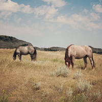 Wild Horses, Landscape, North Dakota Photography,  Medora, Wild West, Horse Art, Travel Photography, Summer print, Cowboy, Boy Room Decor