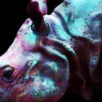 Rhino 1 - Rhinoceros Art Prints