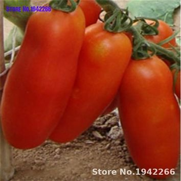 200pcs Bunches of bananas Tomato  organic vegetable bonsai plants for home garden decoration Flowers Ground Cover