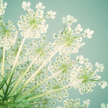 Queen Anne's Lace Flower No. 9 Art Print by Rocky Top Studio