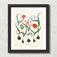 Antique Botanical Tulip No. 3 Giclee Canvas Print