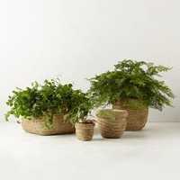 Basket-Weave Garden Pot by Anthropologie Neutral