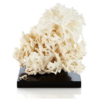 White Fire Coral on Marble & SS Base, Coral, Barnacles, Shells & Starfish