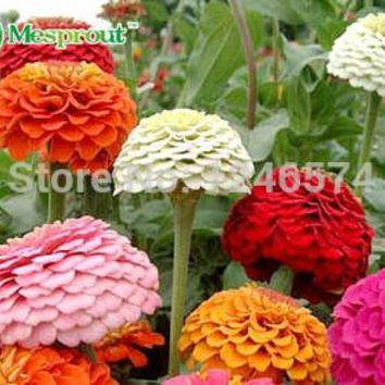 Free Shipping Mix Color Classic Zinnia Elegans Flower Seeds, zinnia seeds, Flower seeds, 50PCS Seed particles