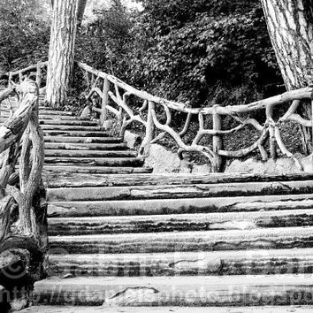 Paris photography: gnarled wood staircase at the Parc Montsouris (black and white print with mat))