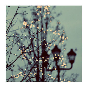 Fine Art Photo, Winter Lights, 8x8 Print, Christmas Lights, Nature Photography, Holiday Scene, Bare Branches, Green Sky