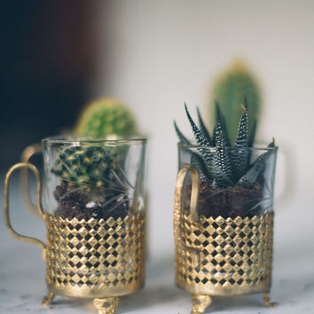 Bouquet of the Month: But First, Cacti