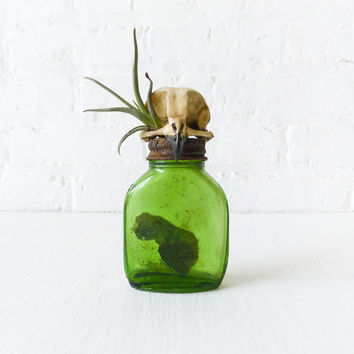 20% SALE - Burrowing Owl Skull Vintage Medicine Bottle - Air Plant - Antique Ink Collection