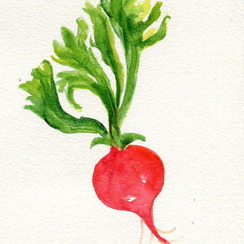 Original  Red Radish Painting watercolor, Vegetable Series, 5 x 7